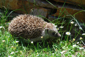 Igel_Matthias