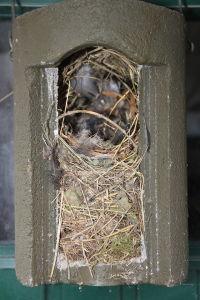 Nest_feldsperling_MatzeGruß2013_WikimediaCommons
