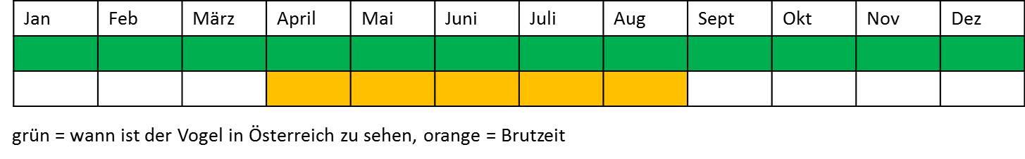 Terminplan Stieglitz