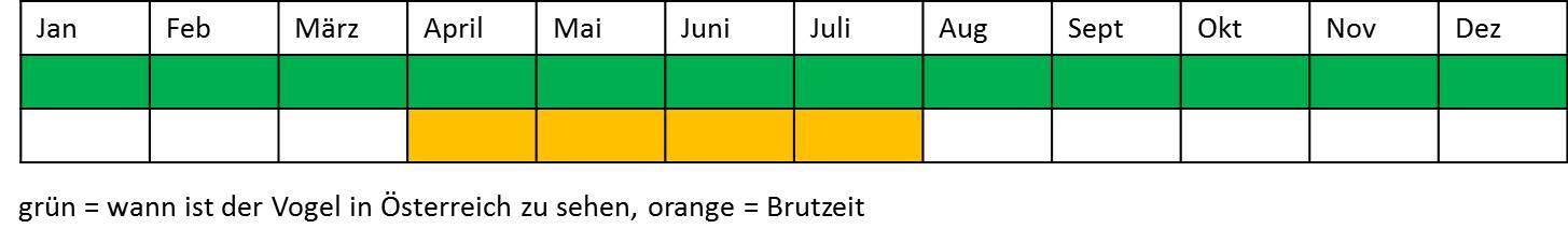 Terminplan Zaunkönig